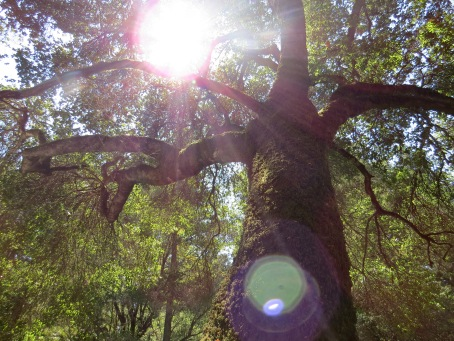 Honeymoon: Big Basin State Park