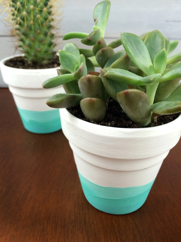 DIY-Painted-Succulent-Pots
