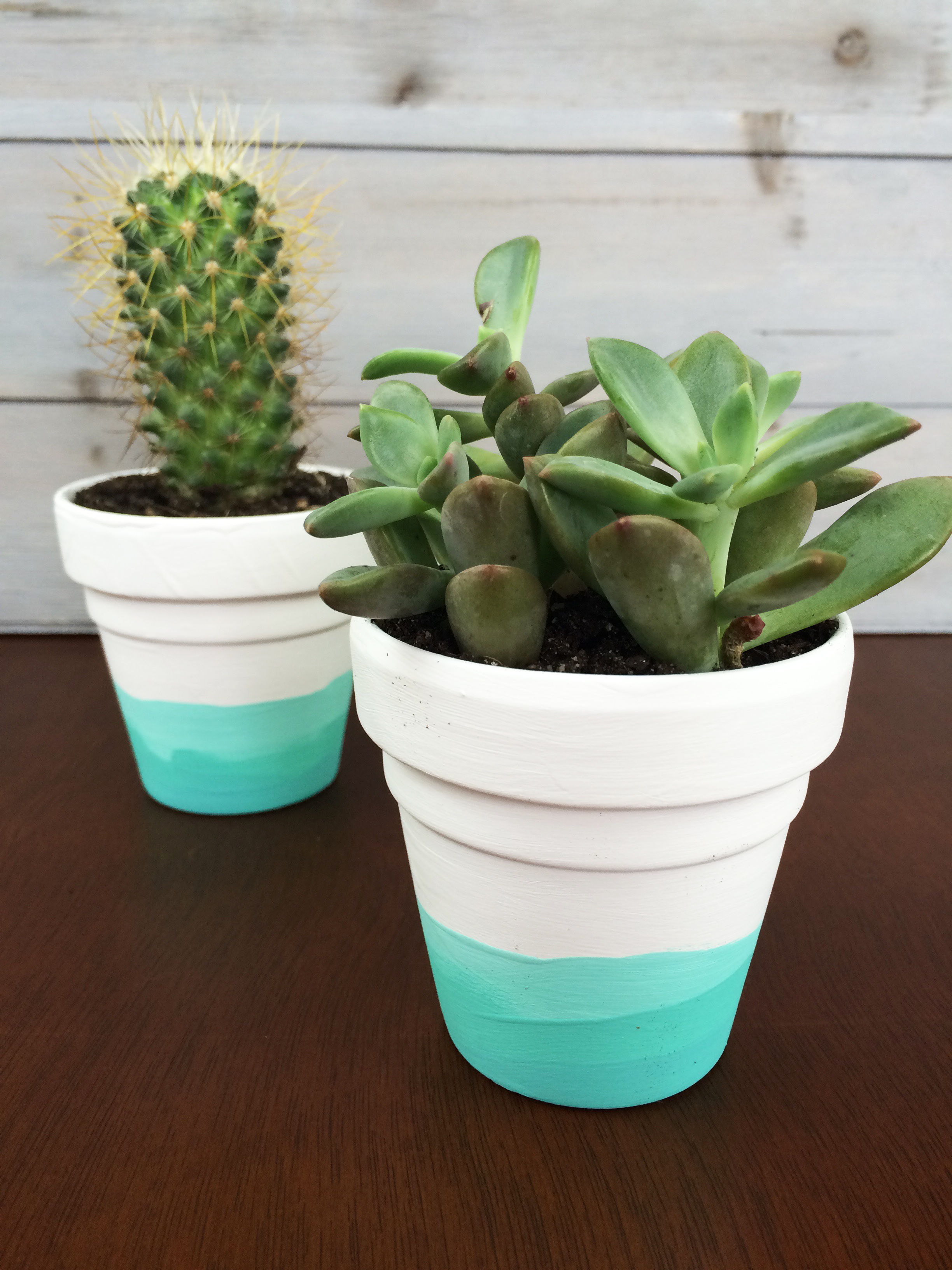 Diy Painted Succulent Pots Beauty And Blooms